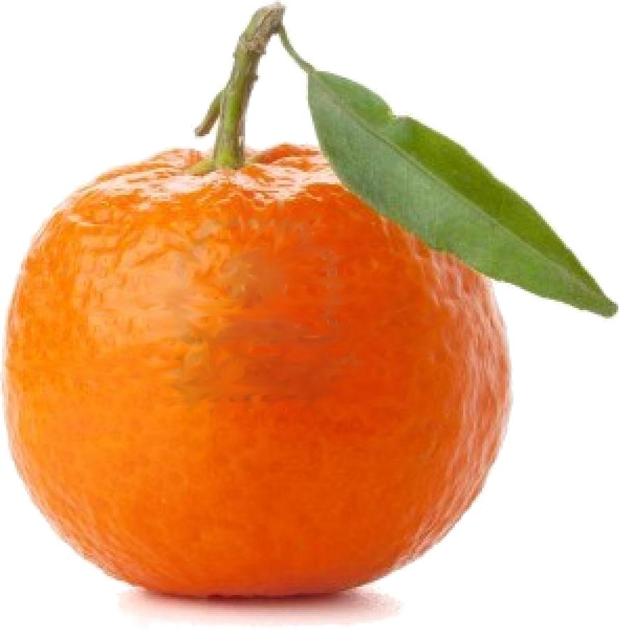 mandarine-seule
